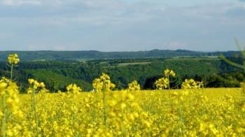 Blick über das Uessbachtal bei Strotzbüsch; ?>