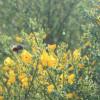 Frühling im Oosbachtal 2014; ?>