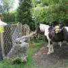 Pferdeparkplatz an der Nohner Mühle; ?>