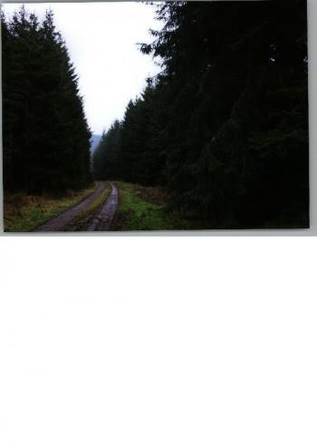 Waldweg bei Jünkerath; ?>