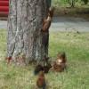 Camping in Gerolstein 2014 - Erste Schritte aus der Eichhörnchenfamilie; ?>