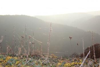 Vegetation auf dem Burberg; ?>