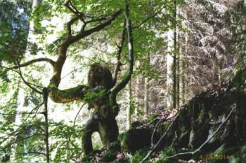 Niederbettingen - Das Wurzelungeheuer vom Roßbüsch; ?>