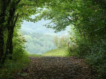 Waldweg am Stausee in Gerolstein; ?>