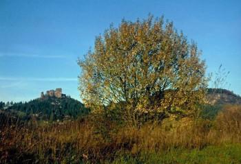 Gerolstein - Auberg im Herbst 2013; ?>