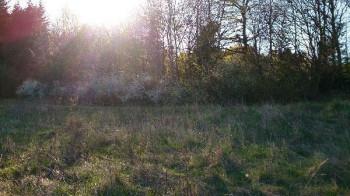 Wald zwischen Darscheid und Boverath; ?>