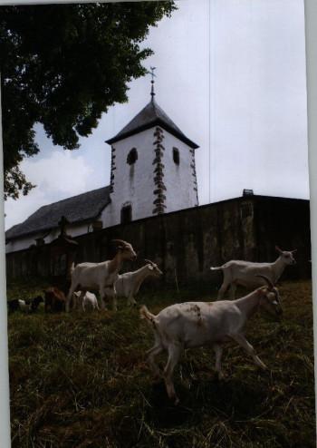 Mähen unterhalb der Wehrkirche in Berndorf; ?>