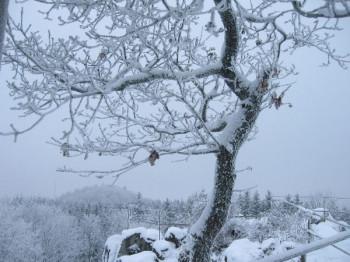 Dietzenlay im Winter; ?>